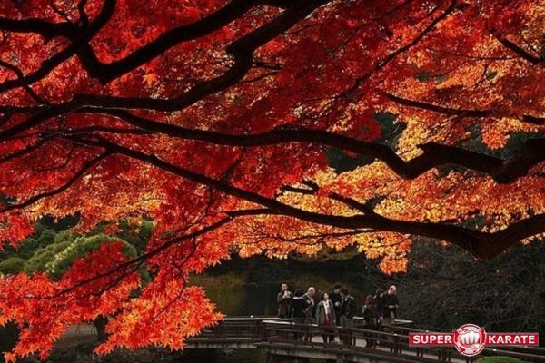 Япония времена года осень